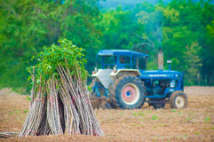 Casava farm. The cassava farm at the countryside of Thailand Stock Images