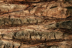 Casca Imagem de Stock