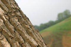 Casca Imagens de Stock Royalty Free