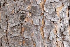 Casca arborizado imagem de stock royalty free