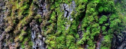 Casca bonita do fundo com musgo da árvore velha fotos de stock royalty free