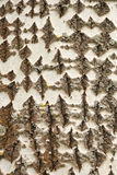 Casca cinzenta Imagens de Stock