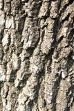 Casca cinzenta do marrom de madeira do teste padrão da árvore da textura Fotos de Stock