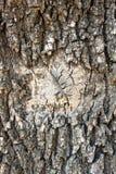 Casca cinzenta do marrom de madeira do teste padrão da árvore da textura Foto de Stock