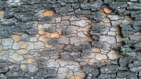 Casca colorida de tree_2 Imagens de Stock Royalty Free
