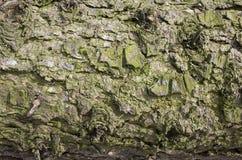 Casca com fundo do musgo Foto de Stock Royalty Free