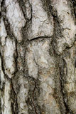 Casca da árvore imagem de stock