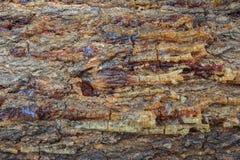 Casca da árvore Fotografia de Stock Royalty Free