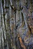 Casca da árvore Foto de Stock Royalty Free