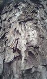 Casca da árvore Fotos de Stock