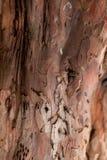 Casca da árvore Fotografia de Stock