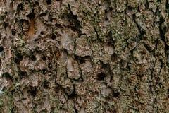 A casca da árvore Foto de Stock