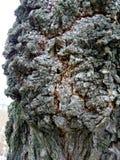 Casca da árvore imagem de stock royalty free