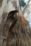 Casca da árvore de Paperbark Foto de Stock Royalty Free