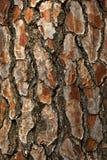 Casca da árvore de pinho fotografia de stock