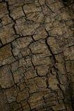 A casca da árvore marrom é áspera fotos de stock