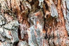 A casca da árvore velha Fundo Imagens de Stock