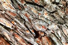 A casca da árvore velha Fundo Foto de Stock Royalty Free