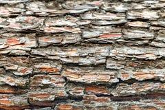 A casca da árvore velha Fundo Foto de Stock