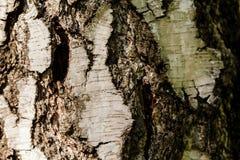 A casca da árvore velha Fundo Fotos de Stock Royalty Free