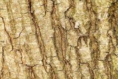 A casca da árvore velha Fundo Imagens de Stock Royalty Free