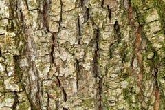 A casca da árvore velha Fundo Fotografia de Stock
