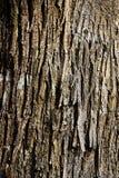 Casca da castanha Fotografia de Stock Royalty Free