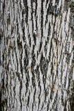 Casca da cinza branca com esmeralda Fotos de Stock Royalty Free