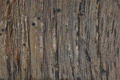 A casca da madeira Imagens de Stock Royalty Free