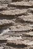 Casca da palma Imagem de Stock Royalty Free