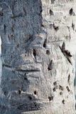 Casca da palmeira Imagem de Stock