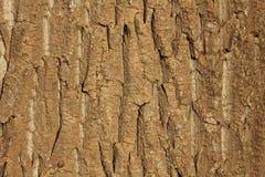 A casca da árvore no beira-rio Imagens de Stock