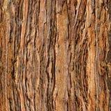Casca da sequoia vermelha para o fundo Fotografia de Stock Royalty Free