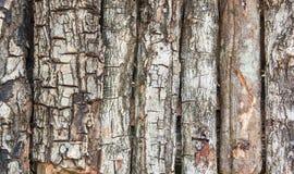 Casca da textura da árvore Imagem de Stock