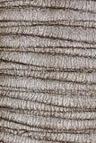 Casca da textura da árvore de pinho Imagem de Stock Royalty Free