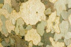 Casca da textura da árvore útil para o fundo Fotos de Stock Royalty Free