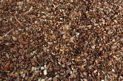Casca da textura do pinho Foto de Stock