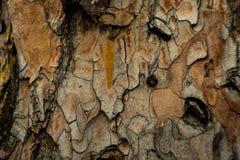 A casca das árvores Fotos de Stock