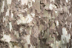Casca das cores da camuflagem Imagens de Stock