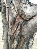 Casca de árvore áspera fotografia de stock