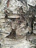 Casca de árvore áspera imagem de stock