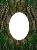 Casca de árvore fotografia de stock