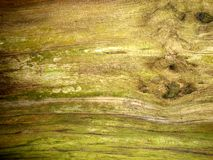 Casca de árvore 12 Foto de Stock Royalty Free