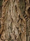 Casca de árvore foto de stock