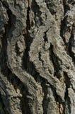 Casca de árvore 2 Fotografia de Stock
