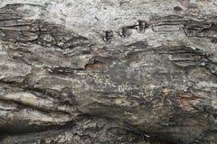 Casca de árvore Foto de Stock Royalty Free