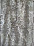 Casca de árvore Fotos de Stock Royalty Free
