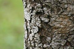 Casca de árvore Fotos de Stock