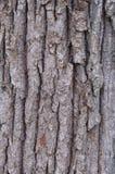 Casca de árvore. Foto de Stock Royalty Free