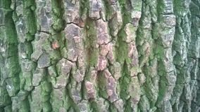 Casca de árvore Imagens de Stock Royalty Free
